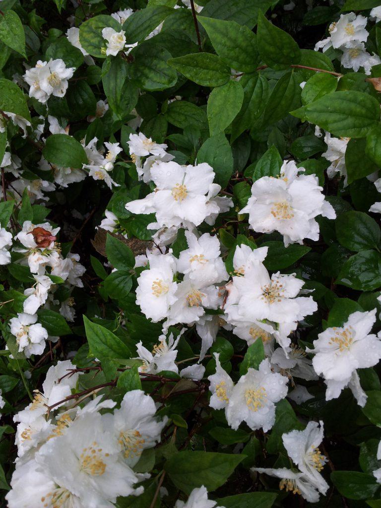 Gardeneing-Tips-002