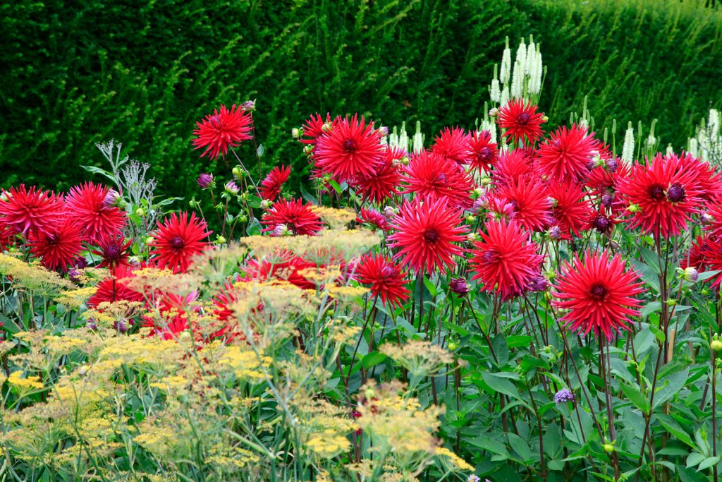 Gardening-Tips-004