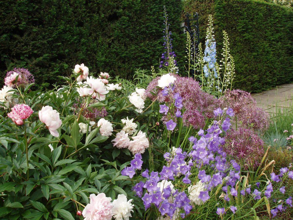 Blog-1---Early-summer-in-Sylvias-Garden