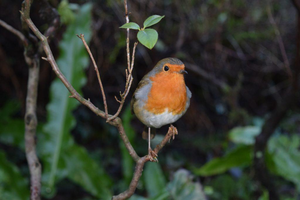 Blog-2---Robin