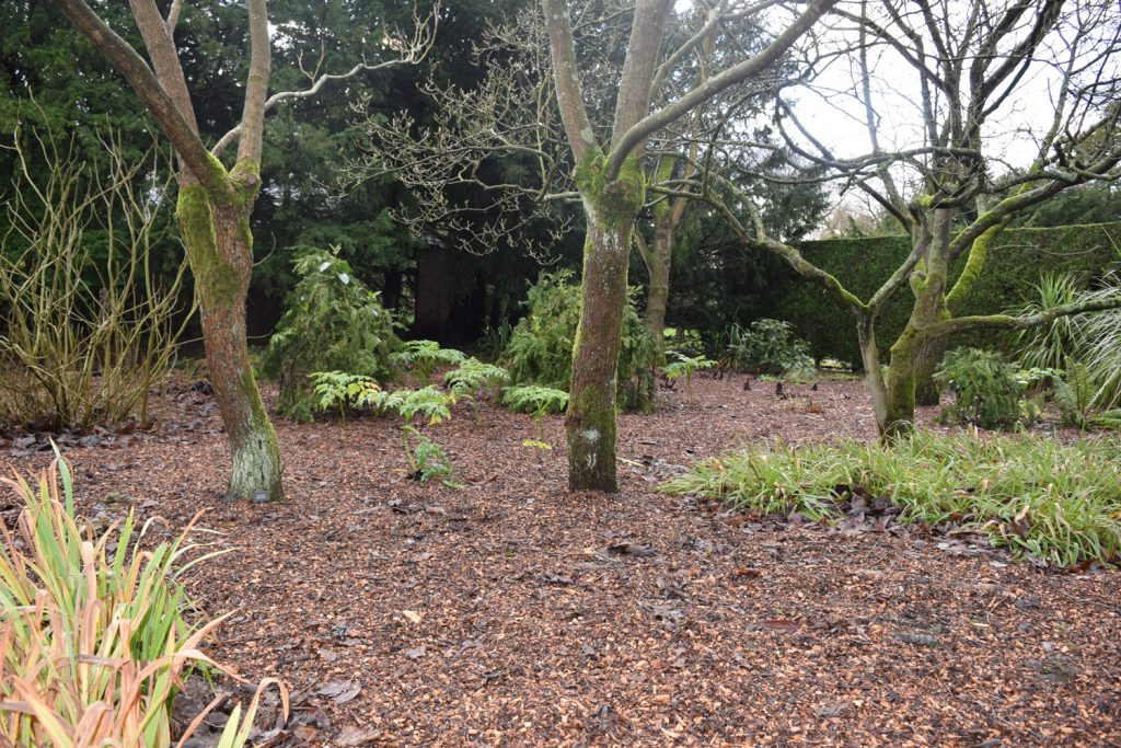 Blog-2---Tropical-Garden-mulched