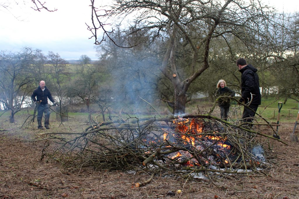 Blog-3---Orchard-pruning